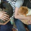 リラックス♡猫ちゃんたちを同時に抱っこ♡