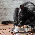 猫のご飯の食べ方がヘタな場合に考えられる理由5つ
