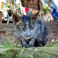 台風で泥だらけになった子猫…優しい保護主のもとで大変身!