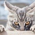 猫に絶対しちゃダメな『挑発行動』5つ