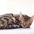 ベンガルがかかりやすい病気とは?ストレス性から猫特有の疾患まで!