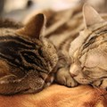 猫が死ぬ前に体に現れる変化と行動8つ