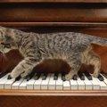 猫がうろうろする5つの心理