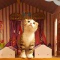 Laylaの12猫占い【1/13~1/19】のあなたと猫ちゃんの運勢
