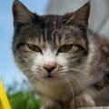 猫にNGな『抱っこの仕方』3選!怪我やトラブルにつながることも…!