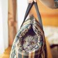猫をキャリーで運ぶ時によくあるトラブル4つ