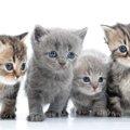 生後2ヶ月の子猫の育て方とその注意点