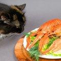 猫に甲殻類は与えない方が良い。エビ・カニの危険性とは