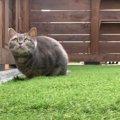 キャットラン?手作りのお庭で遊ぶ猫ちゃんたち♡