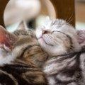 猫の飼育方法に関する6つの疑問