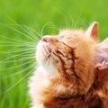 猫の毛色の特徴と様々な模様について