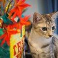 食欲のシーズン到来!猫と一緒に楽しみたい秋の味覚4つ