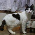 全盲の猫「ルパン」目が見えないハンデがあっても幸せを勝ち取った猫