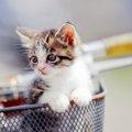 猫を自転車に乗せる方法と注意点