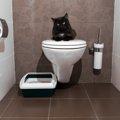 猫トイレの選び方やしつけ方