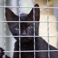 猫と避難する時の持ち物や事前にやっておくべき事