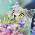 猫が誤食すると死ぬ『危険な植物』6つ