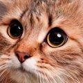 猫の瞳孔が開く5つの理由