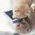 猫が飼い主の携帯やスマホを隠す3つの理由