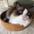 札幌の猫カフェまとめ!譲渡してもらえる店舗まで