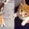 散歩中の犬に小さな追っ手が…温かいお家で美猫へ成長♡