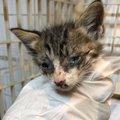 保健所から救われた尊い命、終わりかけた猫生が愛の力で輝き始める