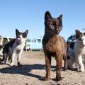 猫は社会性のある生き物?身につく時期やルール