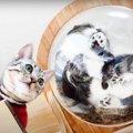 楽しい♡飼い主さんが作ったキャットウォークで遊ぶ猫さんたち!