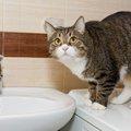 猫が水を飲まない原因と考えられる病気、その対処法