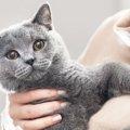 猫の目の色とその色彩感覚について