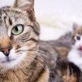 猫は母性本能が強い!面倒見が良いのはどうして?