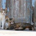 「藍島」は博多から日帰りできる猫島!魅力や行き方、観光スポットを…