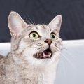 臭いを嗅いだ猫が変な顔をする「フレーメン反応」とは