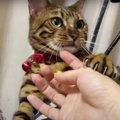 飼い主さんの手をおさえて離さない猫さん♡