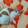 救われた命を大事にしたい…家族の悲しみを取り去ってくれた『愛猫まる…