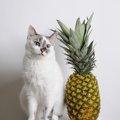 猫にパイナップルは食べさせてもいい?効果と正しい与え方