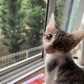 猫が窓の外を眺めている時に見ているもの4つ