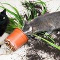 猫が部屋を荒らすのをやめさせる方法5つ