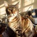 猫に絶対NGの『住環境』5つ
