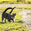 猫の発情期って何?期間や時期、主な行動などについて解説