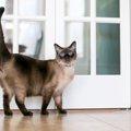 猫がビクビクする理由と可能性のある病気