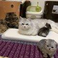 『子猫』と『成猫』の違い5つ