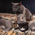 猫の若い頃とシニア期では生活はどう変わる?