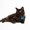 猫の迷子札は効果あり?種類ごとのメリット・デメリット
