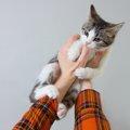 猫が指しゃぶりをする3つの理由とやめさせる方法