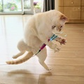 空飛ぶ猫?!いえいえ、「踊る猫」です!【画像】