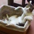 トレーニング中のひと休み!?リラックスしすぎな猫さん!
