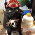 猫用のおせちを大特集!予約の方法やチェックしておきたいおすすめの品まで