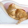 買って正解!愛猫がお気にいりの爪研ぎ「カリカリーナ」を試してみま…
