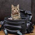 猫の災害対策として必要なものはどんなもの?
